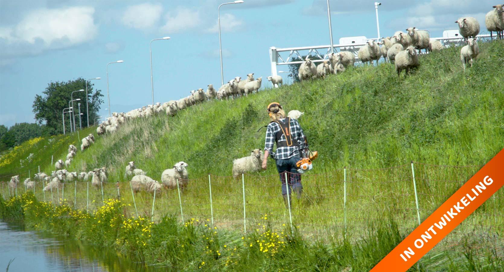 schapenzaken, documentaire schapen, marijke dirkson, Annemarie Mooren Productions